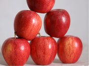 Jabloň GLOSTER - podnož M9