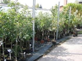 Ovocné stromky v kontejnerech